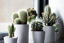. plants .