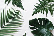 Botanic wedding