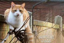 ProtectaPet Cat Garden / Cat fence, cat enclosures and cat gardens