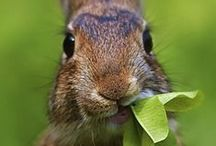 Bunny Diet / Suggested Vegetables and Fruits for a Rabbit Diet
