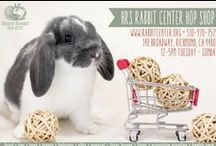 Bun Fun! / How to keep your bunny occupied with fun toys and spaces!