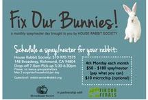 Bunny Health / Everything you need to know before and after getting a bunny to keep them happy and healthy.