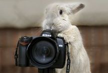 Furry Photography / Rabbit and Hare photographs!