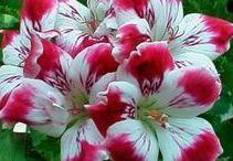 Niezwykłe i zwykłe kwiaty