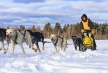 Traîneau à chien au Québec / Un raid en traîneau à chien au Québec, un rêve pour tous les amateurs de paysages sauvages !