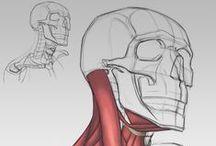 Anatomy & Draw Lesson / Lezioni di disegno tutorial vari