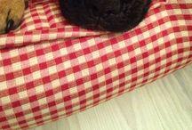 Mathilda / French Bulldog