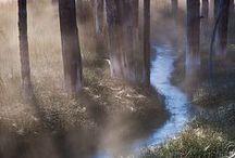 Louky, lesy, zahrádky
