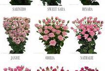 Cerimonial | Guia de Flores / Guia de flores e dicas.