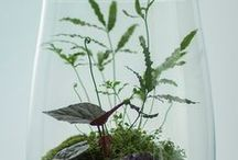 Miniature Gardens / we embrace the wonderful world of terrariums, fairy gardens, miniature train settings, and more