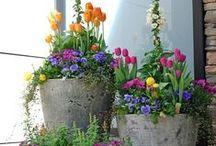 Annual Gardening