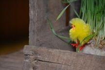 One Birdcage Walk - Easter