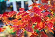 shrubs and trees to love