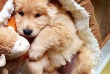 All Things Cute / Anything that is exuding with extreme cuteness!