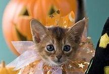 Chic Halloween