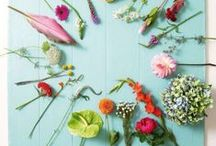 Blumen und Pflanzen • Flowers and Plants / Pflanzen und Blumen, die ich am liebsten alle hätte ...