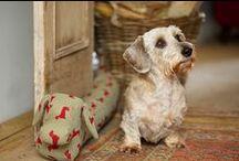 Wohnen mit Hund • Dogs / ... weil erst ein Hund die Wohnung komplett macht.