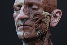 Anatomy pins / Study anatomy