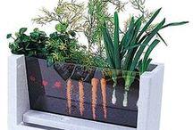 Домашний огород