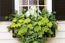 Annual Window Boxes / Bring nature right to your window with stunning botanical's !