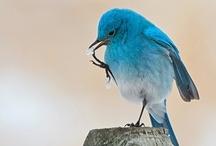 Bird Nerd. / by Rebecca Gerondale