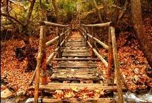 Autumn Joy / by Tracey Sileo Squibb