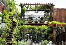 Home: Greenery / Green thumbery / by Ashley A