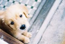 puppy love / by Briana Foster