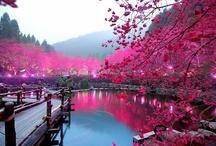 Gorgeous Gardens Around The World / by Bents Garden & Home