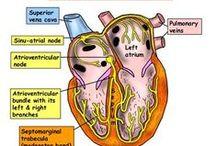 Nursing-Cardiovascular
