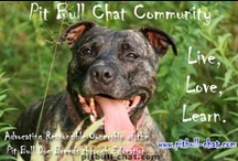 Pit Bull Chat / by PitBull Chat