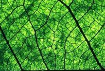 REP - Texture - Nature