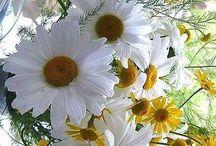 Beautiful Flowers / by Celusnak