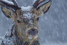 Winter Time in Scotland