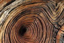 Dřevo / Wood