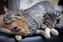 ...big pile o' sleep! / by Alex Brownstein