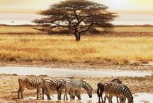 Namibia Safari / Namibia is characterized by its desert habitat. This harsh environment forms a magnificent backdrop for a different kind of safari. Go to Namib Naukluft national park and Skeleton Coast national park for superb views and go to Etosha national park for classic safaris. Visit http://www.safaribookings.com/Namibia for more information why you should not miss a safari in Namibia.