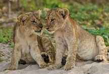 Africa's Cutest Animals and Wildlife Photos / The cutest African wildlife photos!
