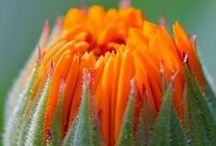Flowers / Flowers is God's way of showing us how much He loves us