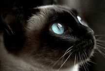 Cats / I have not enough words to describe their beauty ♡ and innocence ♡