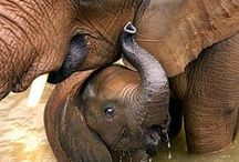 Motherhood with animals / All the cutest babies in the world.