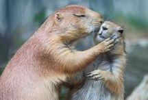 Animal Kisses / Animal love.