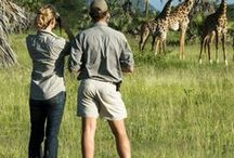Safari Tours / What's the perfect safari tour for your trip? There's a wide range of African safaris, from affordable to luxurious, family friendly to once in a lifetime adventures. Compare safari experiences and read reviews from other travelers at http://www.SafariBookings.com