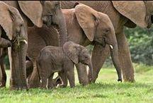Elephants at River Bend Lodge