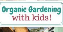 Organic Gardening for Kids / Organic gardening for children | Teaching kids how to grow their own food | Did you know we grow our own delicious organic vegetables at Emerald City Nursery so our preschool children understand from their very young age the wonders of growing food?