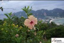 Thailand / Zeisen Spezialreisen ist der renommierte Reiseveranstalter für Individual,- und Spezialreisen. Zusammen Reisen -> ZEISEN