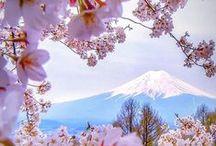 flores / delicadeza e beleza em cores e formas... arte da natureza.