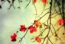 autumn / autumn...my favorite