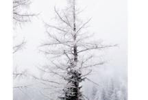 winter / winter, white, beautiful