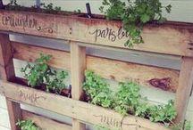 Moestuin inspiratie / Prachtige plaatjes, leuke moestuintips en mooie tuinen.